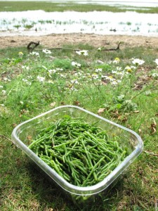 Punnet of freshly picked samphire
